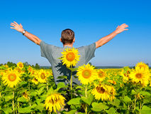 Man in the field of sunflowers Royalty Free Stock Photos