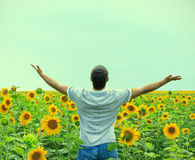 Man in the field of sunflowers Stock Image
