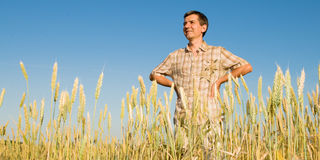 Man in the field of wheat Stock Photography