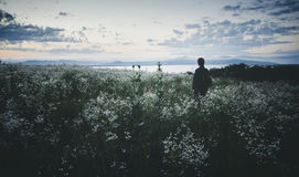 Man in field of wild flowers in summer at sunset royalty free stock photos