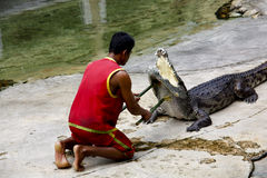 The Man fight against Crocodile Royalty Free Stock Images