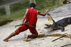 The Man fight against Crocodile Stock Images