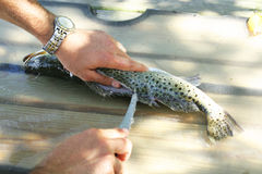 Man filleting a fish. Shot of a man filleting a fish Royalty Free Stock Images