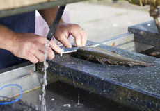 Man Filleting a Rainbow Trout Stock Photos