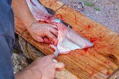 Man fillets fresh fish. Stock Photo