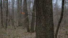 Man firing arrow into tree in forest stock video