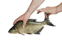 Man and fish. Royalty Free Stock Photography