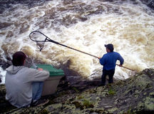 Man fishing. Dipping gaspereau fish (kiack) with a dipnet gaspereau are a member of the herring family thay migrat up to 3000 KM thay are used for food and bait Royalty Free Stock Photos
