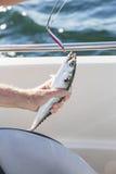 Man fishing mackerel from boat at sea Stock Photos