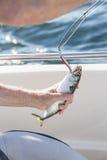 Man fishing mackerel from boat at sea Stock Image