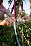 Man Fixing a Bike - Vertical Royalty Free Stock Photos