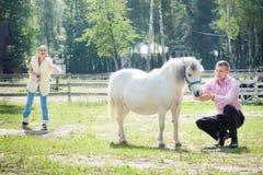 Man, flicka och häst Fotografering för Bildbyråer