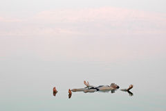 Man floating in a glassy water of dead sea Stock Photography