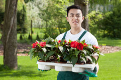 Man with flower seedlings Stock Image