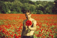 Man with flowers. guy with muscular body in field of red poppy seed. Man with flowers. guy with muscular body and athletic torso hold flower bouquet in field of stock image