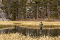 Man fly fishing in meadow stock image