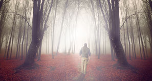 Man in a foggy fores Stock Photos