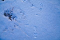 Man footprints left on snow surface close-up stock photos