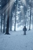 Man in the forest. Isolated man in the snowy forest Stock Photos