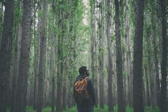 Man in forest Stock Image