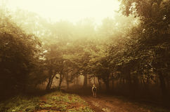 Man in forest with spooky surreal forest with strange light Royalty Free Stock Photography