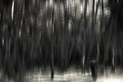 Man in the forest. Man standing in a dark forest Royalty Free Stock Photography