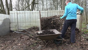 Man with fork load compost into old wheelbarrow in backyard stock video