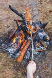 A man fries sausages against the grass on a campfire in the spring forest. In the frame of one hand royalty free stock photos