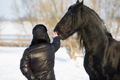 Man with frisian horse Stock Images