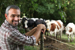 Man in front of cows Stock Photography