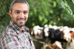 Man in front of cows Royalty Free Stock Photo