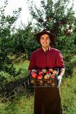 Man garden collect ripe apples hat green red proprietor worker owner harvest box basket. Young happy man in the garden collect ripe apples. A worker in the stock image