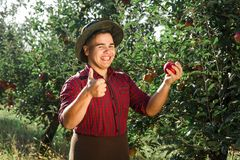 Man garden collect ripe apples hat green red proprietor worker owner harvest. Young happy man in the garden collect ripe apples. The owner of apple orchard is stock photo