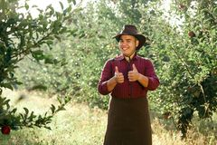 Man garden collect ripe apples hat green red proprietor worker owner harvest. Young happy man in the garden collect ripe apples. The owner of apple orchard is royalty free stock image