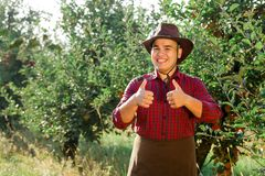 Man garden collect ripe apples hat green red proprietor worker owner harvest. Young happy man in the garden collect ripe apples. The owner of apple orchard is royalty free stock images