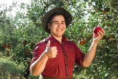 Man garden collect ripe apples hat green red proprietor worker owner harvest. Young happy man in the garden collect ripe apples. The owner of apple orchard is royalty free stock photo