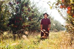 Man garden collect ripe apples hat green red proprietor worker owner harvest. Young happy man in the garden collect ripe apples royalty free stock photos