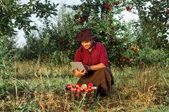 Man garden collect ripe apples hat green red proprietor worker owner harvest. Young happy man in the garden collect ripe apples. Farmer in his own garden looking royalty free stock photo