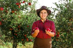 Man garden collect ripe apples hat green red proprietor worker owner harvest. Young happy man in the garden collect ripe apples. The owner is pleased with the royalty free stock photos