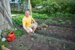 Man in the garden grows zucchini Stock Photos