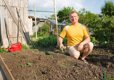 Man in the garden grows zucchini Stock Images