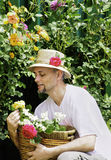 Man in garden picking roses Royalty Free Stock Photo
