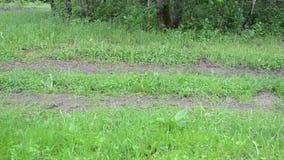 Man garden worker wood stock footage