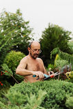Man gardener with clippers in hand making art cutting juniper. Stock Photography