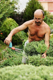 Man gardener with clippers in hand making art cutting juniper. Stock Photo