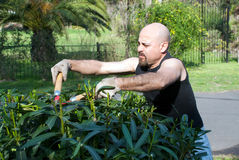 Man gardener cut a Bush Stock Images