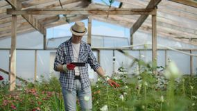 Man gardener in a hat looking for flowers. A modern florist uses a tablet computer to analyze the yield of flowers. stock footage