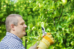 Man with gardener shears Stock Photo