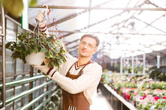 Man gardener working and hanging flowers in pots Stock Photos