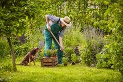 Man gardening dog Royalty Free Stock Photos